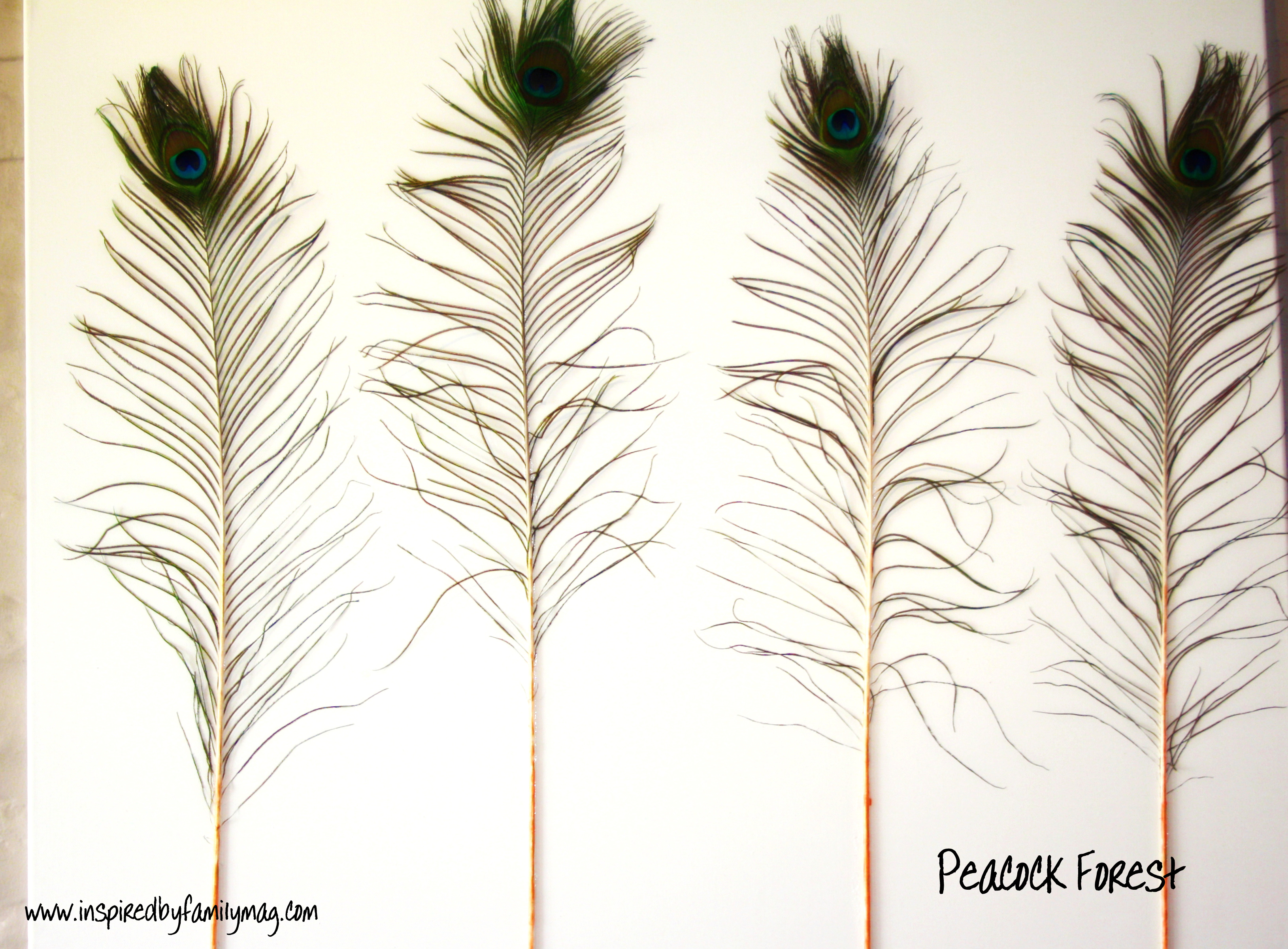 DIY Peacock Feather Art You Just Need Featherscanvas Glue And Some Paint For The Background