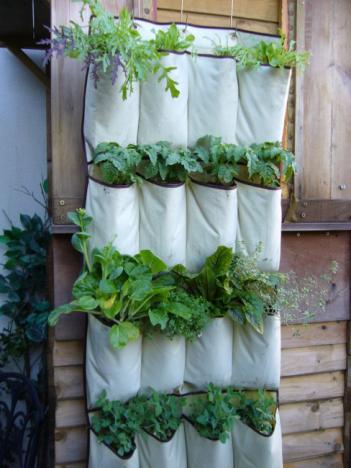 plant organizer