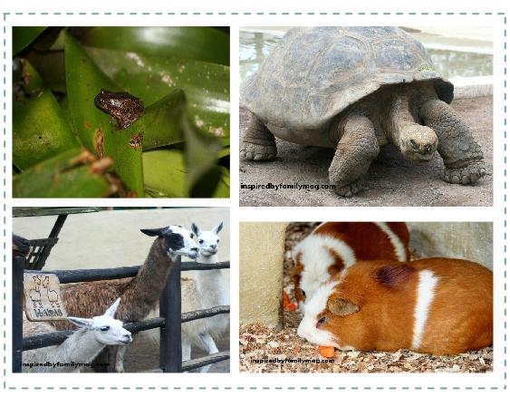 ecuador animals
