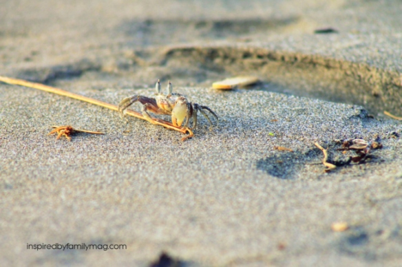 crab hunting on the beach